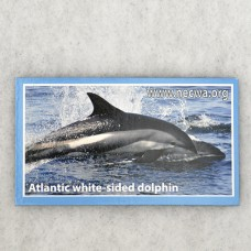 Atlantic White-sided Dolphin Magnet